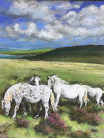 White Ponies on Dartmoor